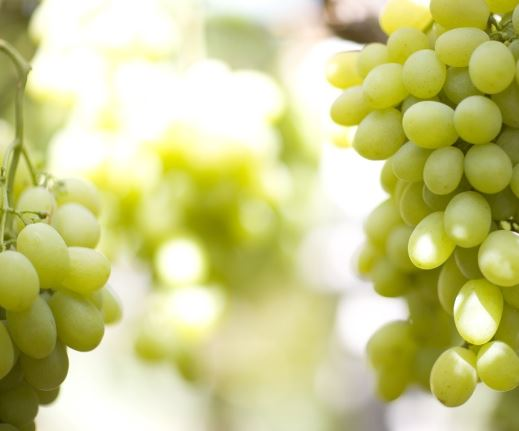 Credited:  white grape seedless - vds expoert